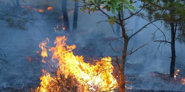 Thumbnail for Brandgefährlich - Tourismus ohne Klimaschutz!